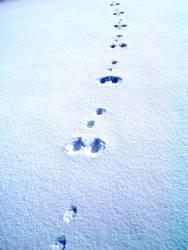 Spuren im Schnee #2