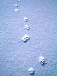 Spuren im Schnee #3