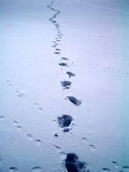 Spuren im Schnee #4