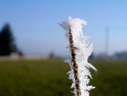Frostästchen #3