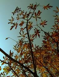 kastanienbaum.