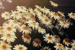 Blumenfeld im Sonnenschein