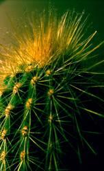 Staub-Kaktus