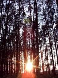 Zentralgestirn und Bäume