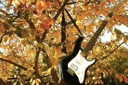Chillen im Baum