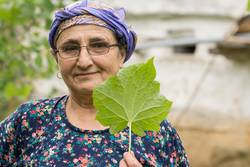 Portrait of a senior Muslim woman holding a fresh leaf