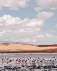 Beautiful lagoon in southern Bolivia with lots of pink flamingos