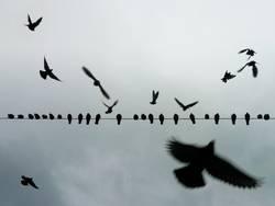 Wie ein Vogel auf dem Draht
