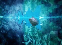 Me, The Fish & The Sea