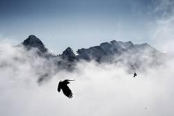 Höhenflieger