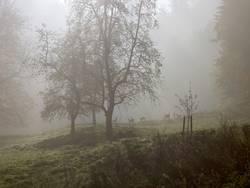 Rehe im Nebel