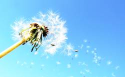 The Answer, My Friend, Is Blowing In The Wind