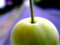 Apfel #1 alias Mirabelle