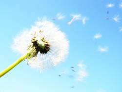 The Answer, My Friend, Is Still Blowing In The Wind