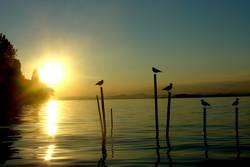 Vögel im Sonnenschein