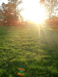 Shiny Herbst