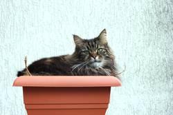 Katze im Kübel