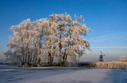 Riped trees near Streefkerk