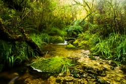 Kleiner Bach in Neuseelands Regenwäldern