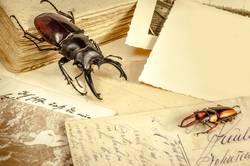 Stilleben mit Käfer