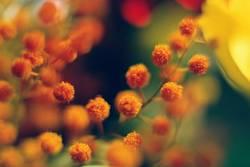 lustige blüten