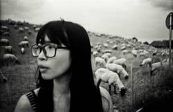 meet the sheeps