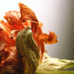 Blumengeschnörkel *2*
