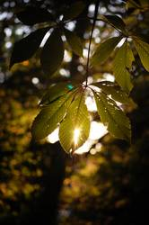 It´s time...autumn glory
